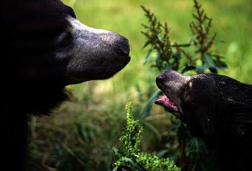 熊 子供 数 大きさ