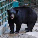 熊の駆除や捕獲数ってどれくらい!?