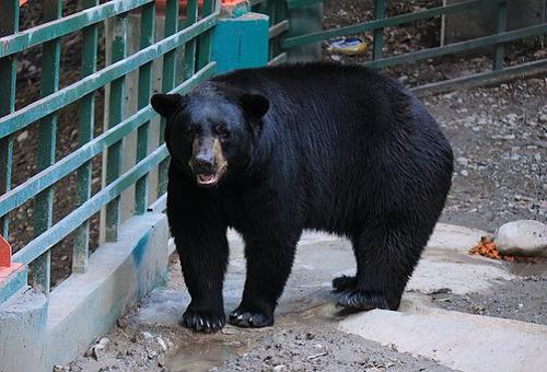 熊 駆除 数