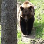 熊に出会う前に!出没の時期や時間帯っていつ!?