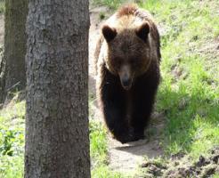 熊 出没 時期 時間帯