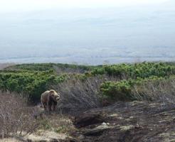 熊 逃げる 方法