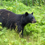 熊による被害は日本で年間どれくらい!?