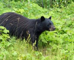 熊 被害 日本 年間