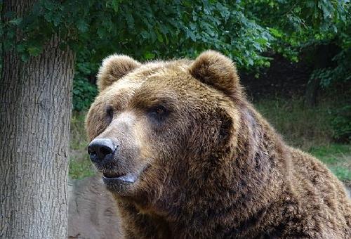 熊 大きさ 法則
