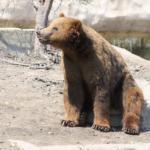 熊の聴覚と嗅覚はどれくらい発達しているの!?