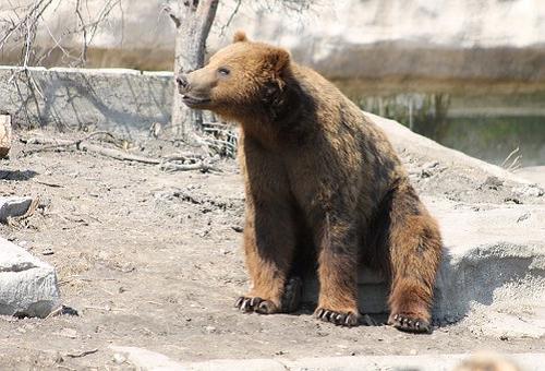 熊 聴覚 嗅覚