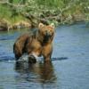 熊 鳴き声 威嚇