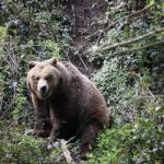 登山の熊対策!熊に遭遇する時期はいつ!?