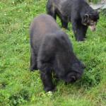 熊の習性について!埋める習性がある!?