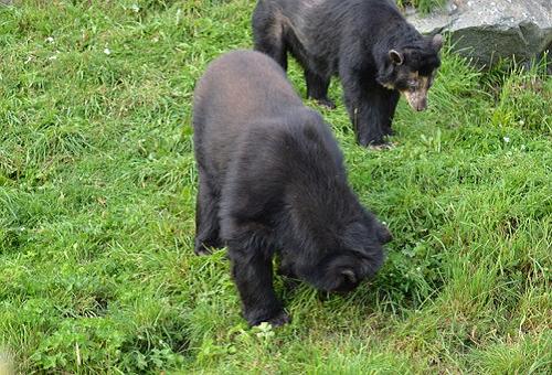 熊 埋める 習性