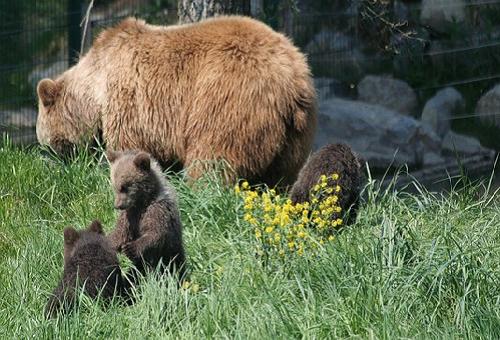熊 冬眠 出産