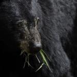 熊の飼育方法や値段について!飼育許可ってどこでとれる?