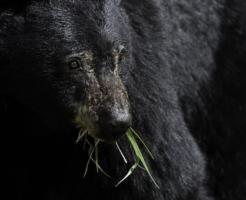 熊 飼育 値段 許可