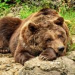 熊の爪は何本あるの?雑菌だらけ?