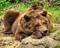 熊 爪 何本 雑菌 威力