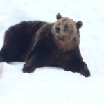 熊の冬眠!目覚める時期はいつ頃!?