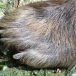 熊の足跡の特徴!大きさはどれくらい!?