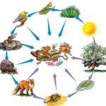 熊の生態系の役割って一体何!?