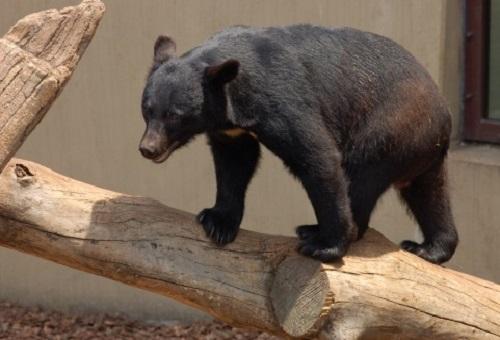 熊 動物園 冬眠 餌