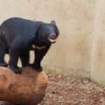 熊の分布は?日本の熊はどんな熊?