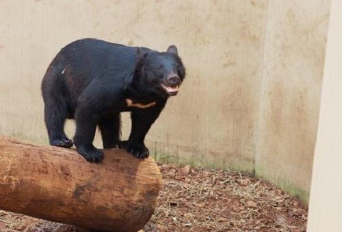 熊 日本 生息地