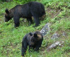 熊 身長 体重
