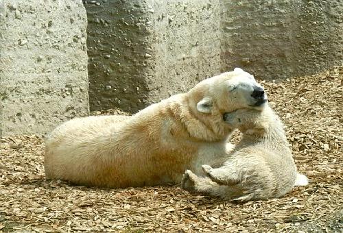 熊 子供 食べる