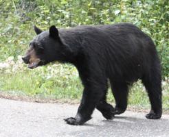 熊 種類 日本 生息数